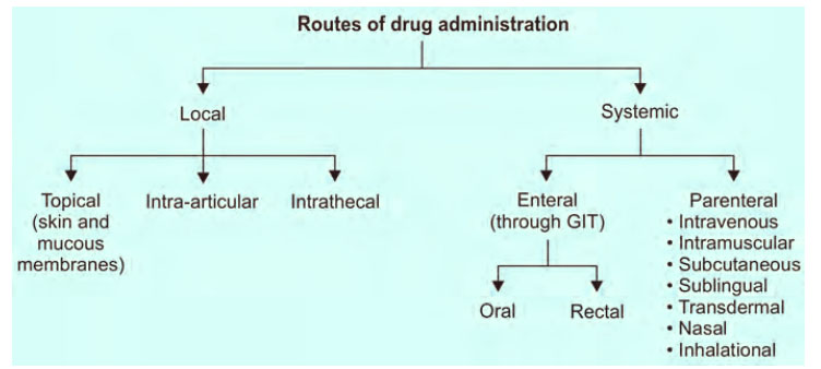Routes of Drug Administration in Pharmacology