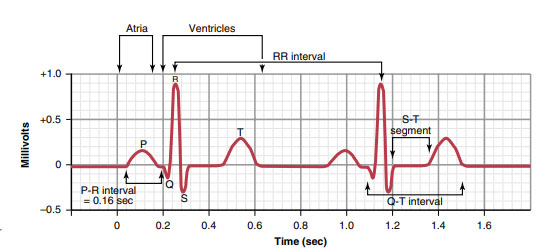 A normal ECG for two beats